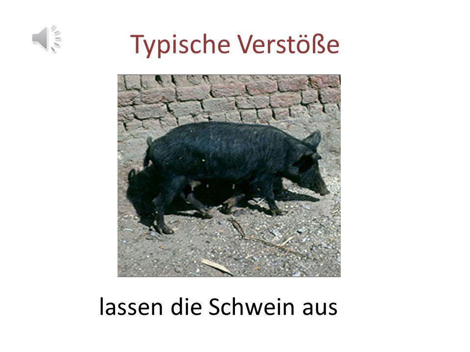 Typische Verstöße lassen die Schwein aus