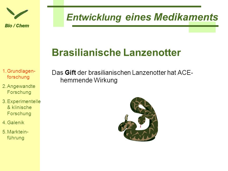 Brasilianische Lanzenotter