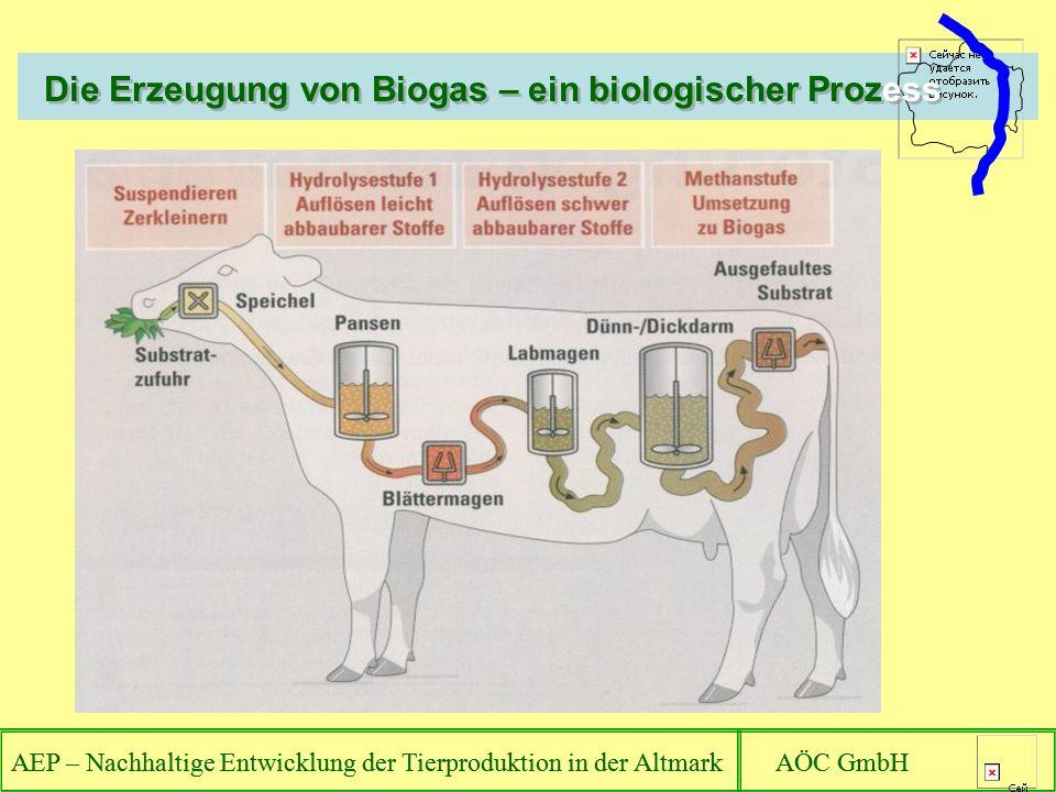 Die Erzeugung von Biogas – ein biologischer Prozess