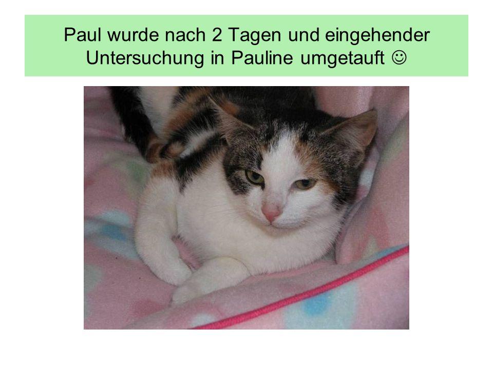 Paul wurde nach 2 Tagen und eingehender Untersuchung in Pauline umgetauft 