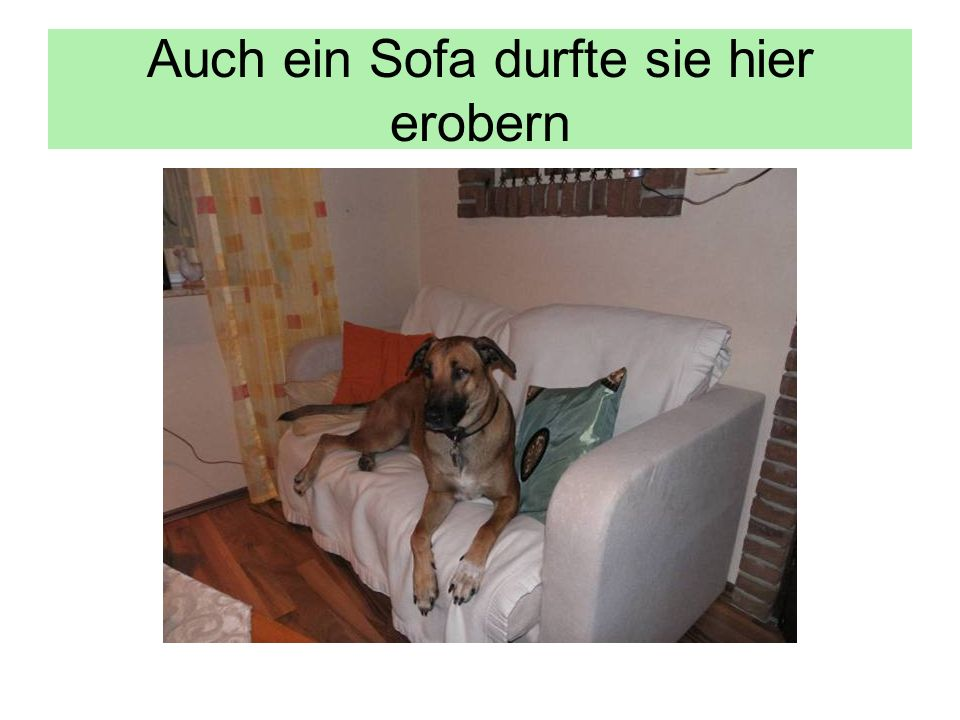 Auch ein Sofa durfte sie hier erobern