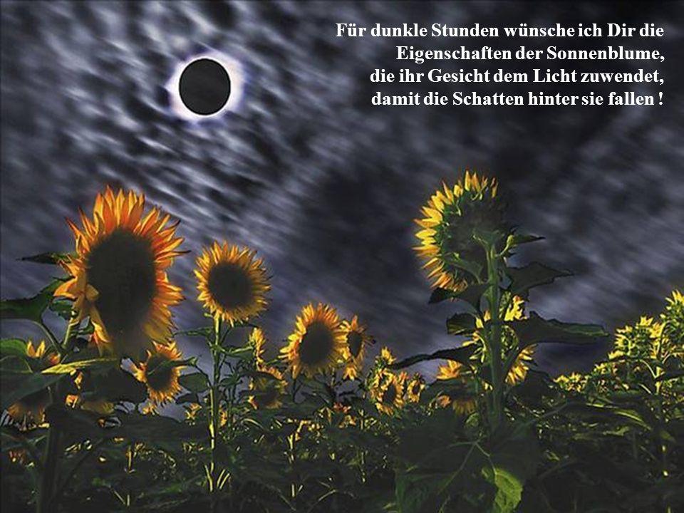 Für dunkle Stunden wünsche ich Dir die Eigenschaften der Sonnenblume, die ihr Gesicht dem Licht zuwendet, damit die Schatten hinter sie fallen !