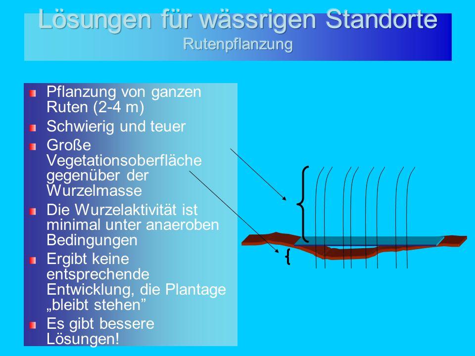 Lösungen für wässrigen Standorte Rutenpflanzung