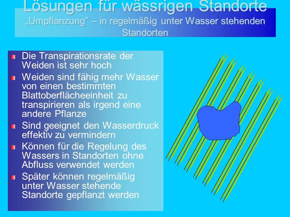 """Lösungen für wässrigen Standorte """"Umpflanzung – in regelmäßig unter Wasser stehenden Standorten"""