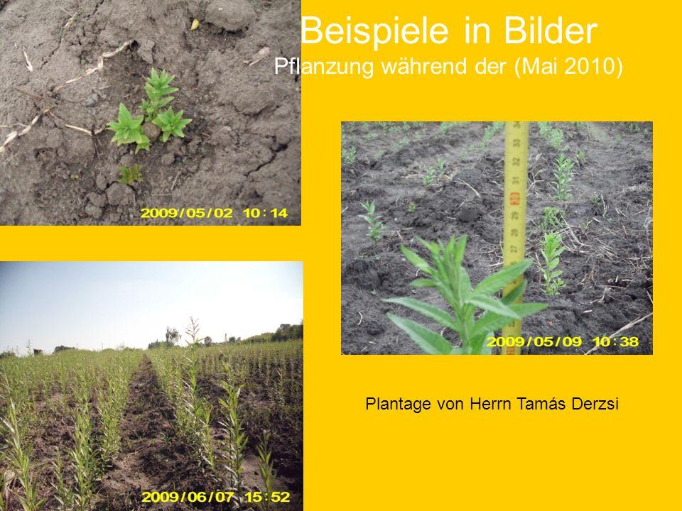 Beispiele in Bilder Pflanzung während der (Mai 2010)