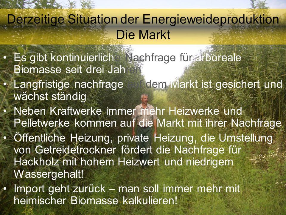 Derzeitige Situation der Energieweideproduktion Die Markt