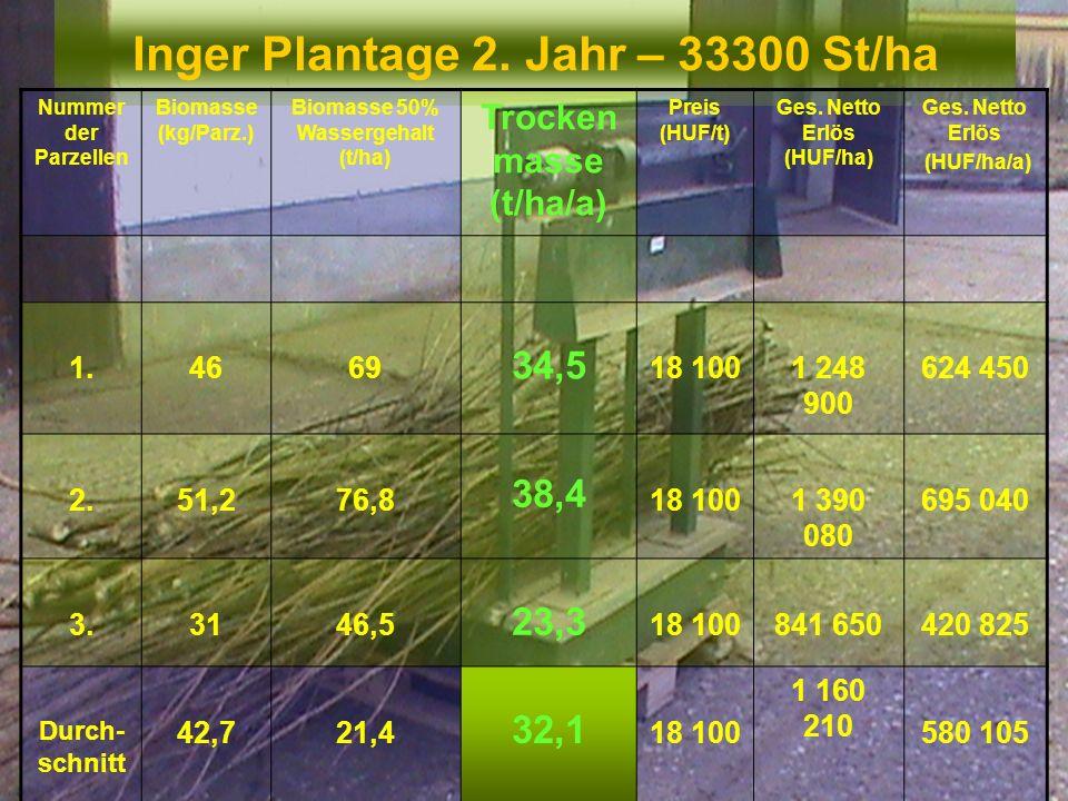 Inger Plantage 2. Jahr – 33300 St/ha