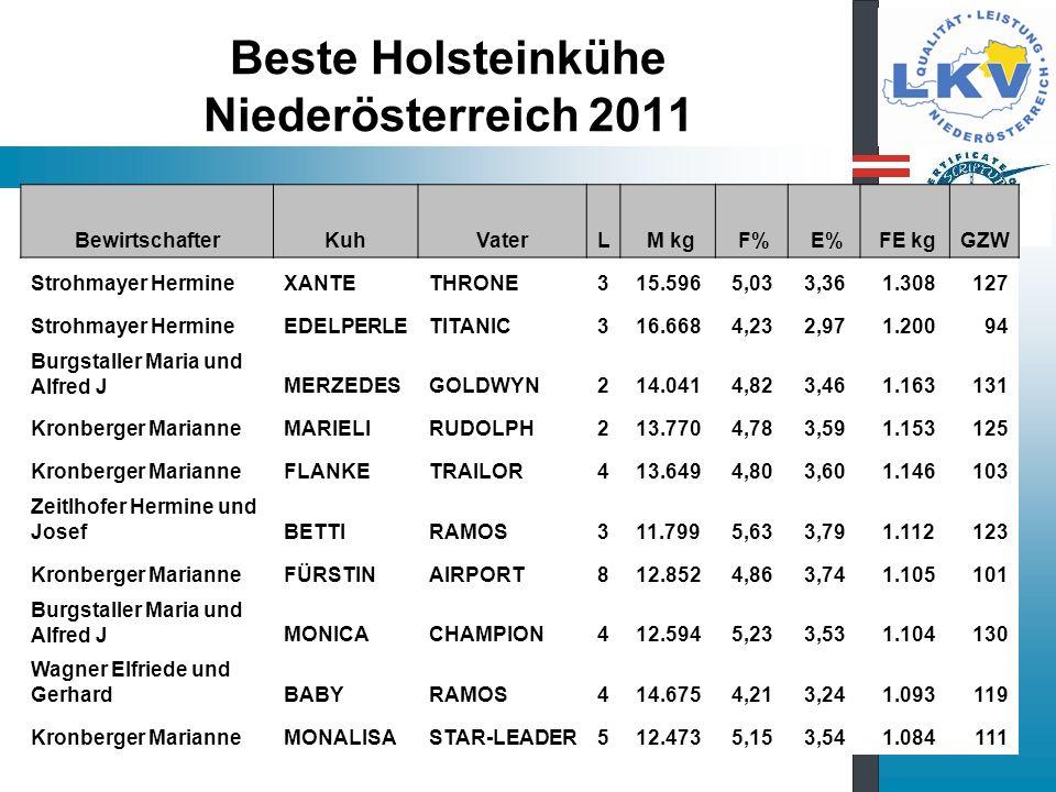 Beste Holsteinkühe Niederösterreich 2011
