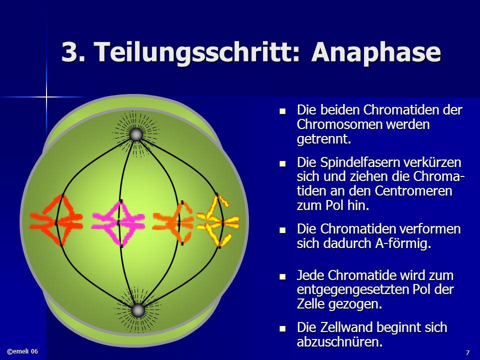 3. Teilungsschritt: Anaphase