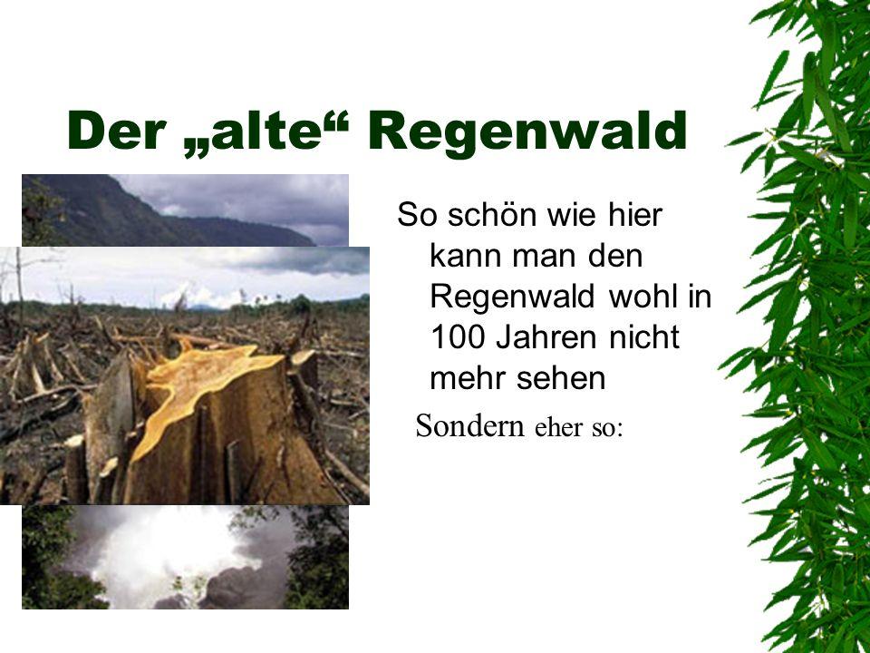 """Der """"alte Regenwald So schön wie hier kann man den Regenwald wohl in 100 Jahren nicht mehr sehen."""