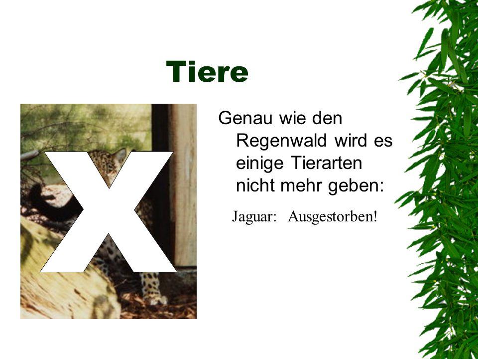 Tiere Genau wie den Regenwald wird es einige Tierarten nicht mehr geben: X Jaguar: Ausgestorben!