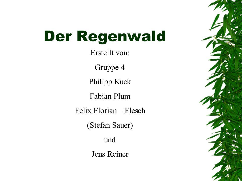 Der Regenwald Erstellt von: Gruppe 4 Philipp Kuck Fabian Plum