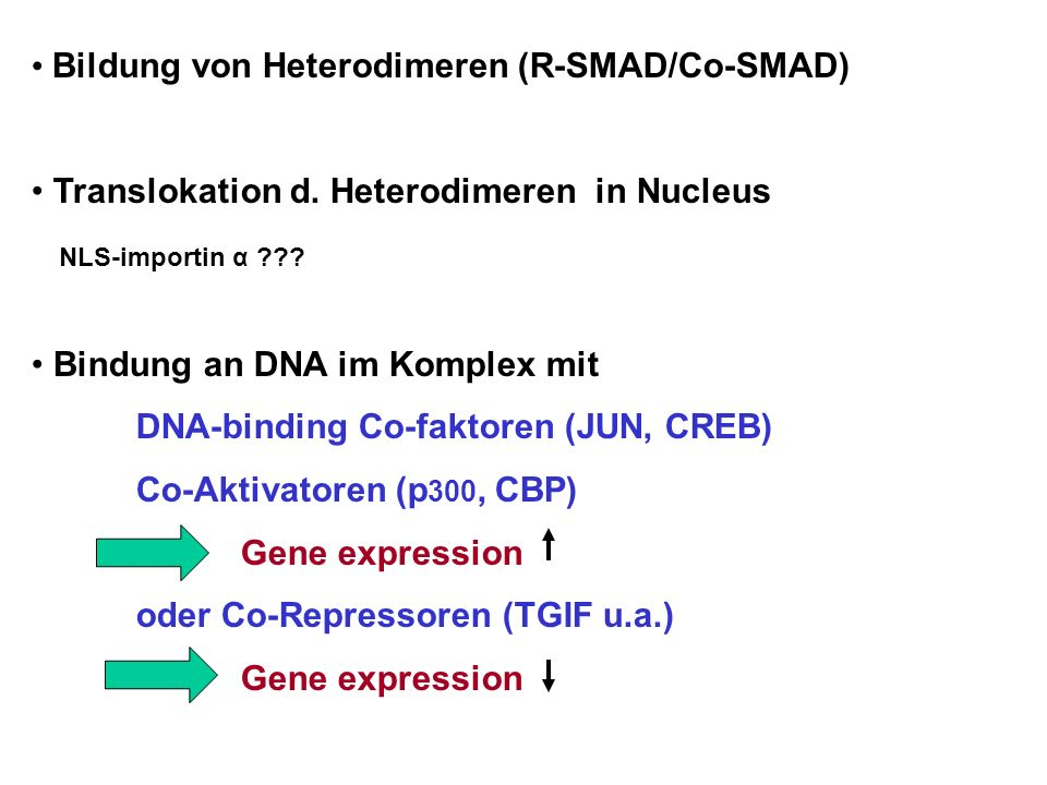 Bildung von Heterodimeren (R-SMAD/Co-SMAD)