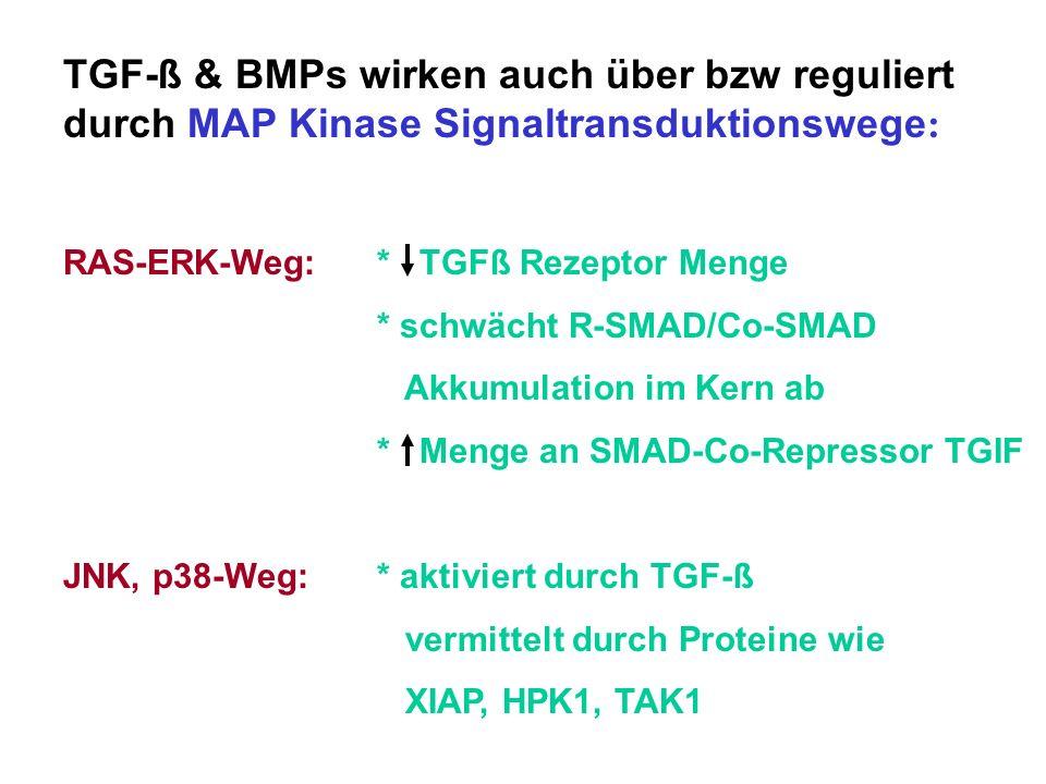 TGF-ß & BMPs wirken auch über bzw reguliert durch MAP Kinase Signaltransduktionswege: