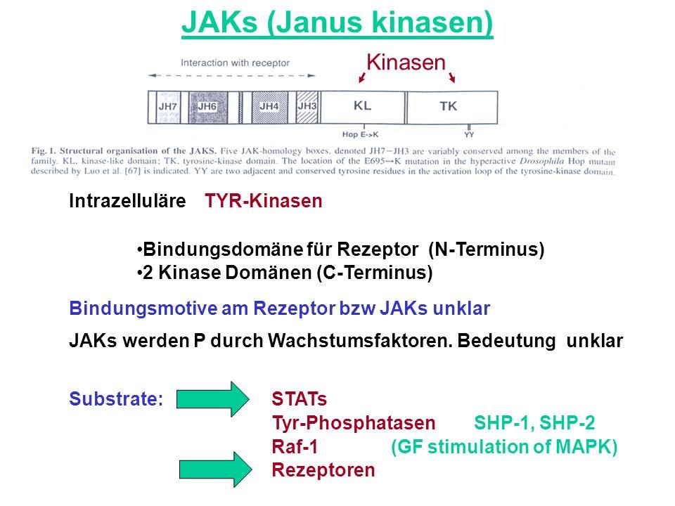 JAKs (Janus kinasen) Kinasen Intrazelluläre TYR-Kinasen