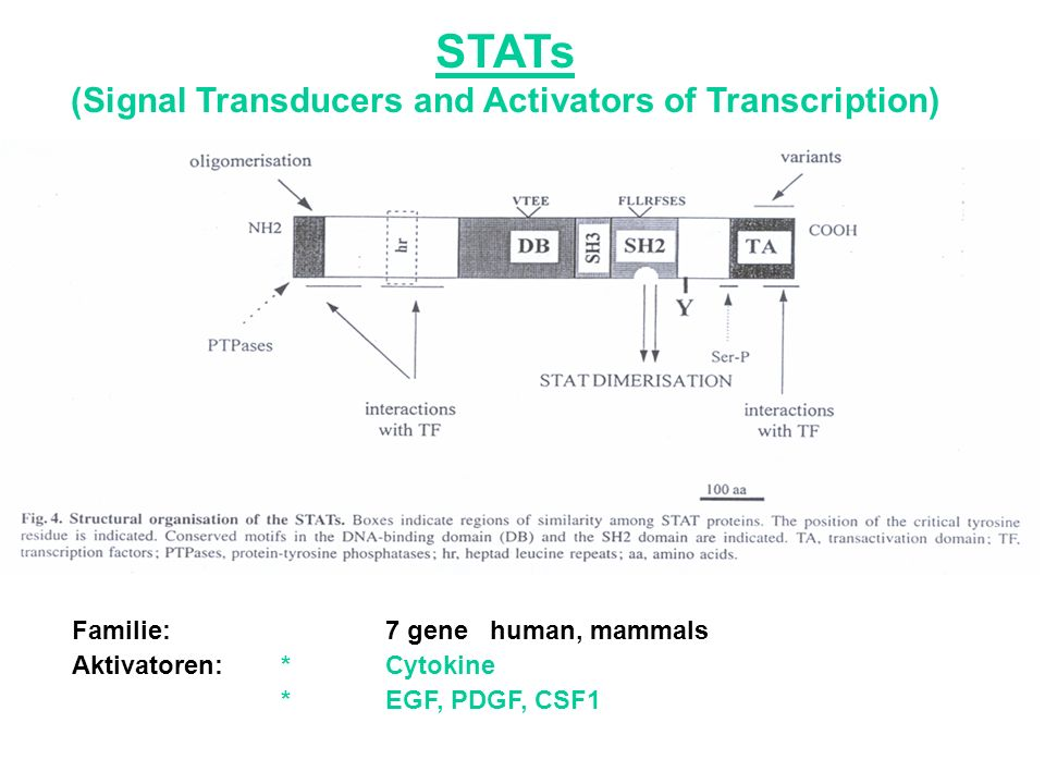 (Signal Transducers and Activators of Transcription)