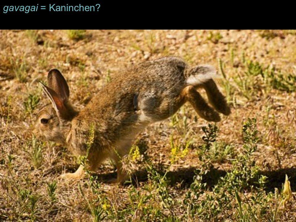 gavagai = Kaninchen