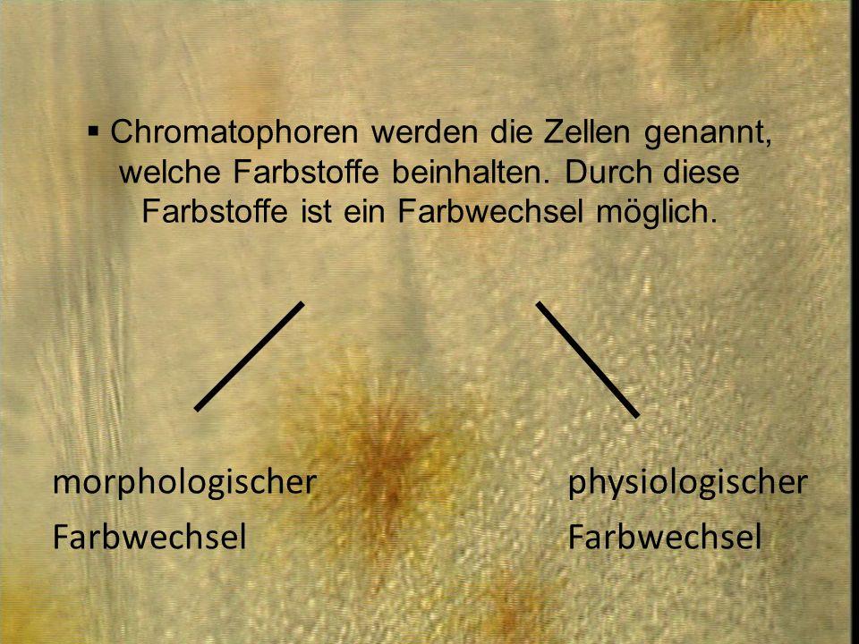 morphologischer physiologischer Farbwechsel Farbwechsel