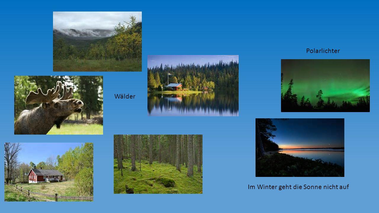 Polarlichter Wälder Im Winter geht die Sonne nicht auf