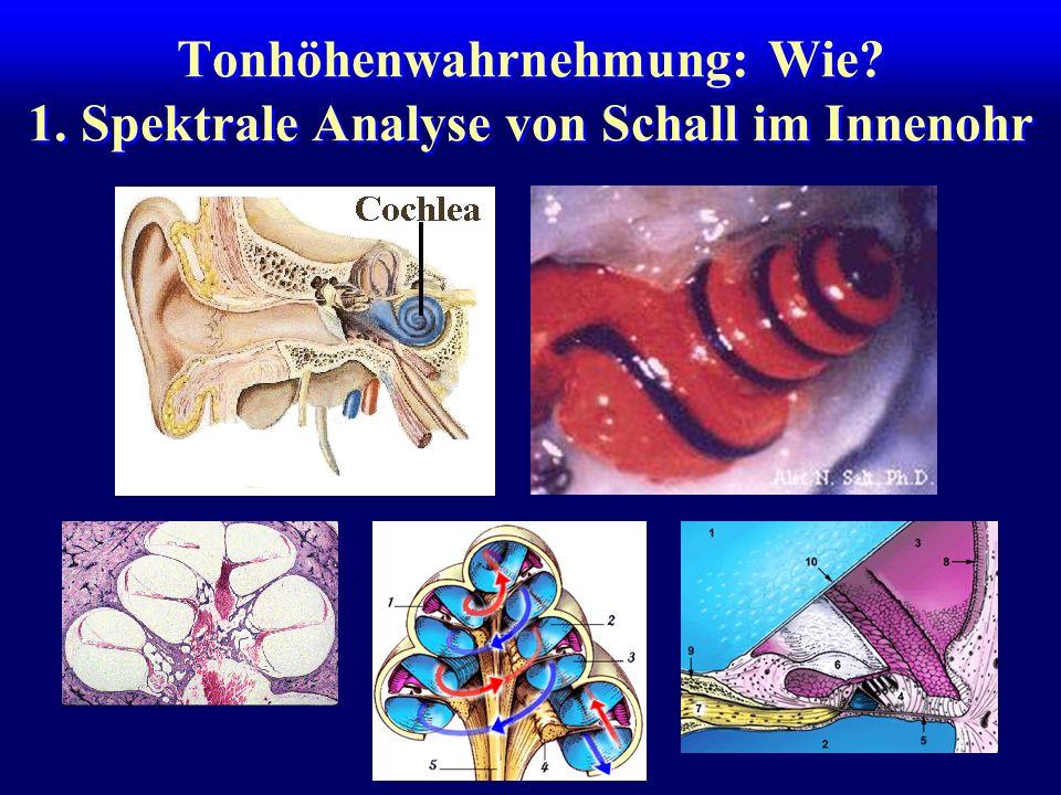 Tonhöhenwahrnehmung: Wie 1. Spektrale Analyse von Schall im Innenohr