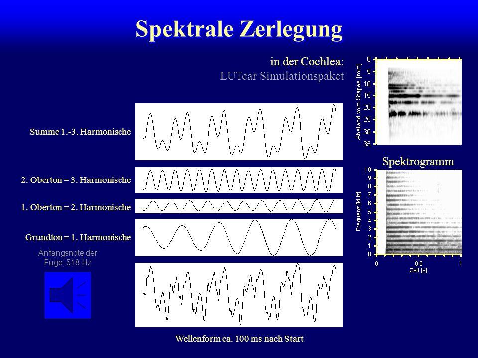 Spektrale Zerlegung in der Cochlea: LUTear Simulationspaket