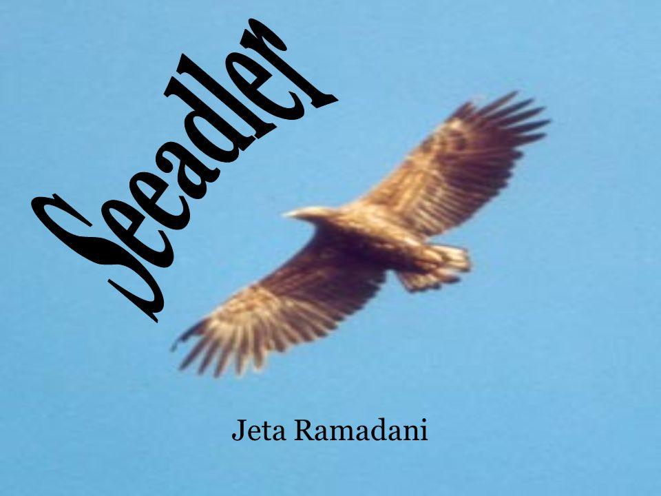 Seeadler Jeta Ramadani