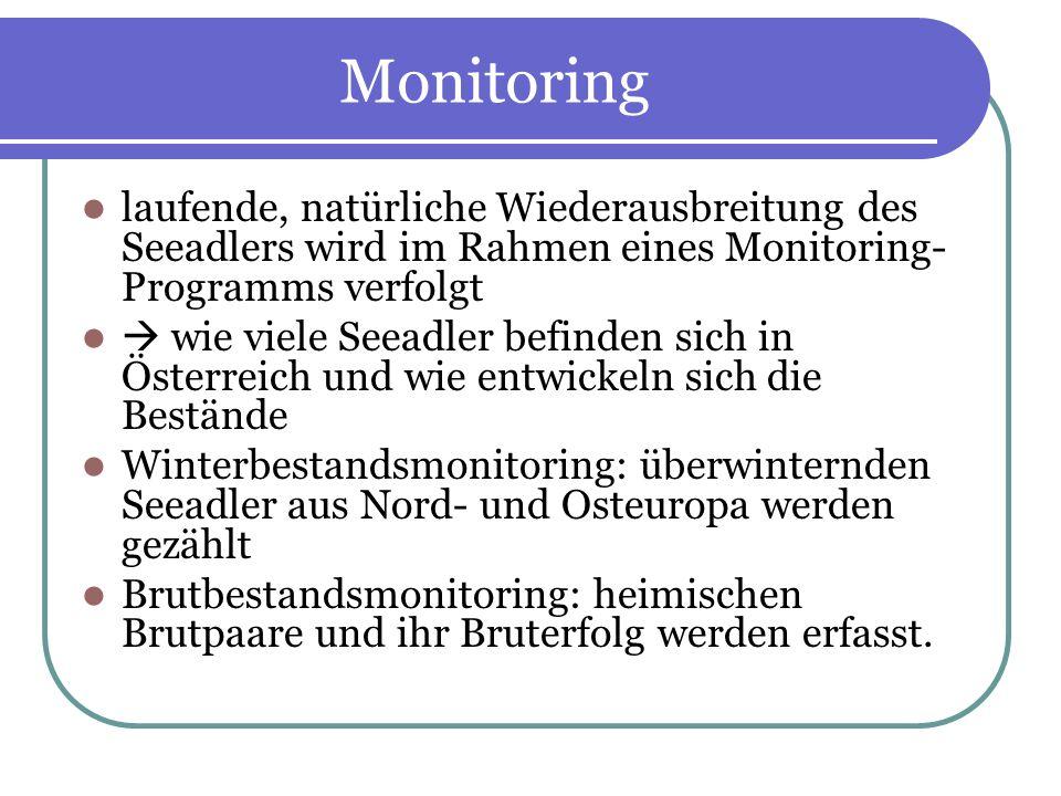 Monitoring laufende, natürliche Wiederausbreitung des Seeadlers wird im Rahmen eines Monitoring-Programms verfolgt.