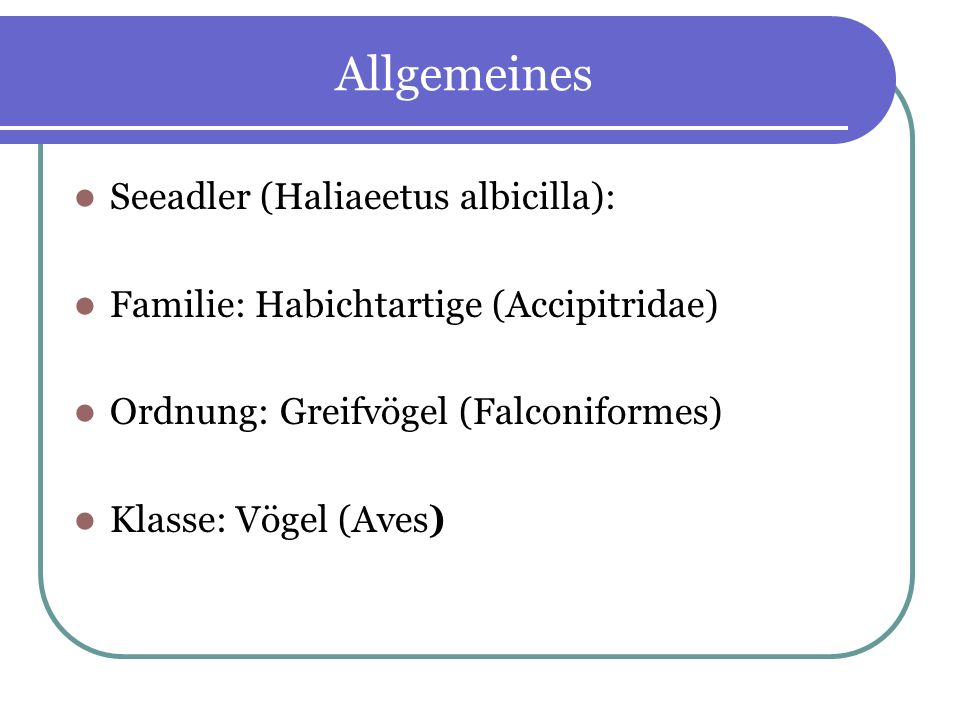 Allgemeines Seeadler (Haliaeetus albicilla):