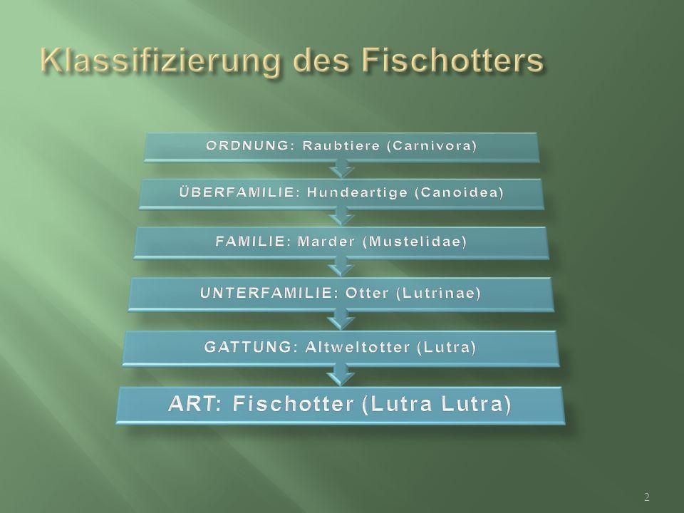 Klassifizierung des Fischotters