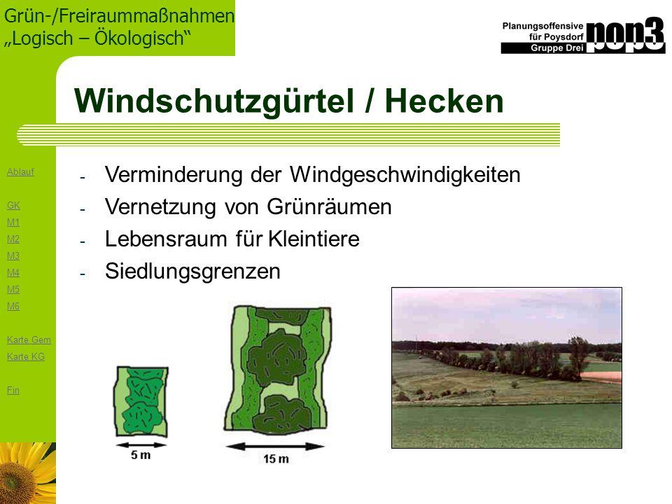 Windschutzgürtel / Hecken
