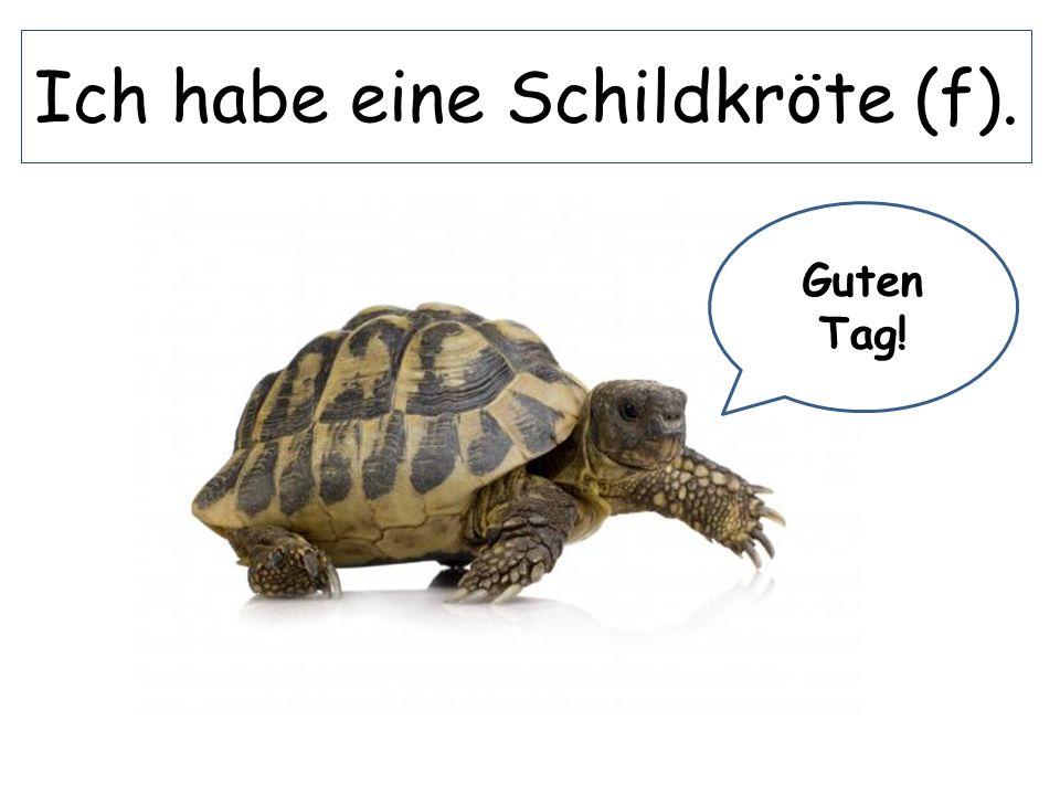 Ich habe eine Schildkröte (f).