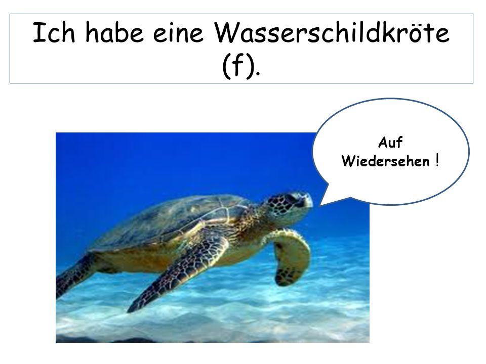 Ich habe eine Wasserschildkröte (f).