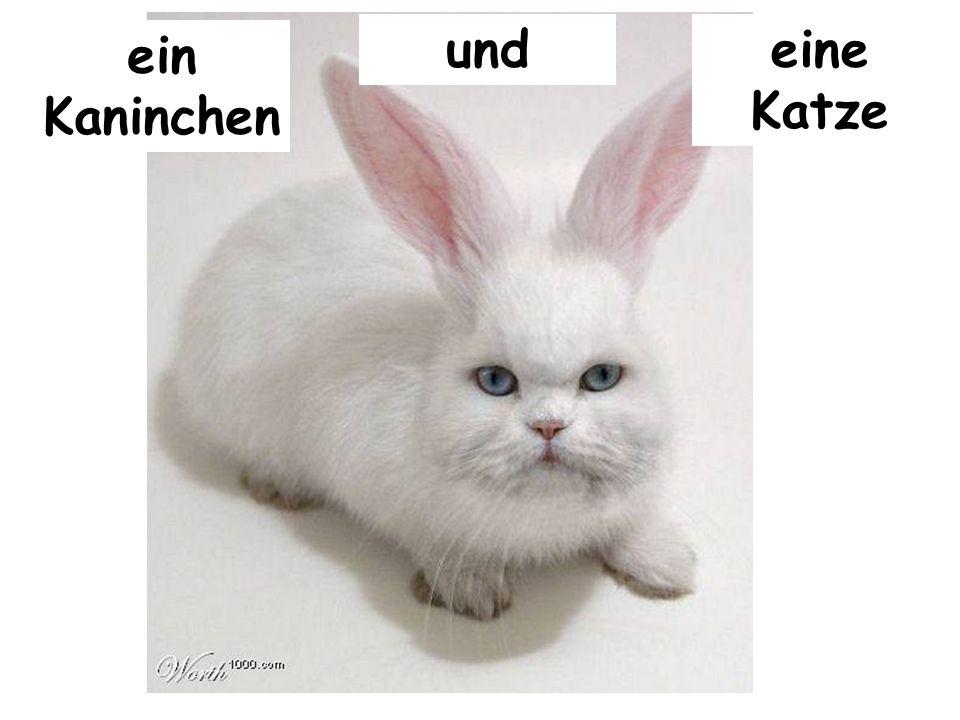 und eine Katze ein Kaninchen