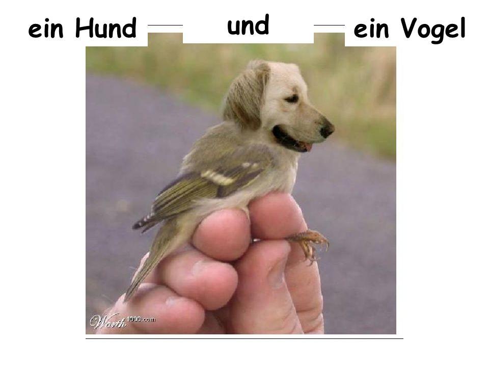 und ein Hund ein Vogel