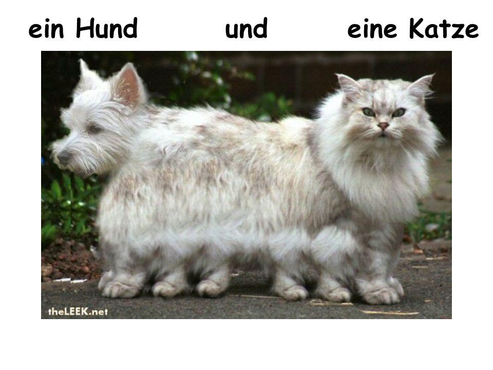 ein Hund und eine Katze