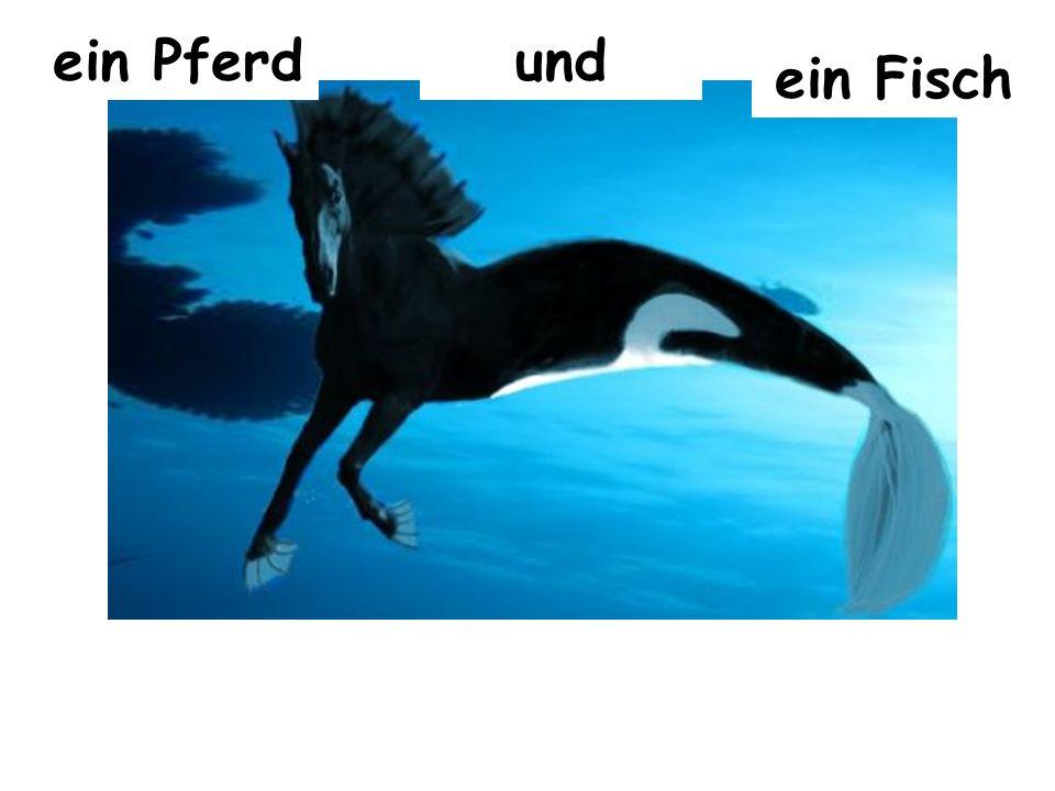 ein Pferd und ein Fisch