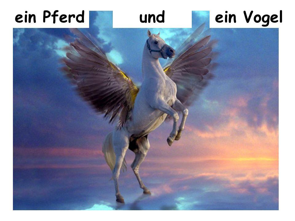 ein Pferd und ein Vogel