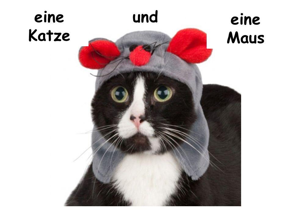 eine Katze und eine Maus