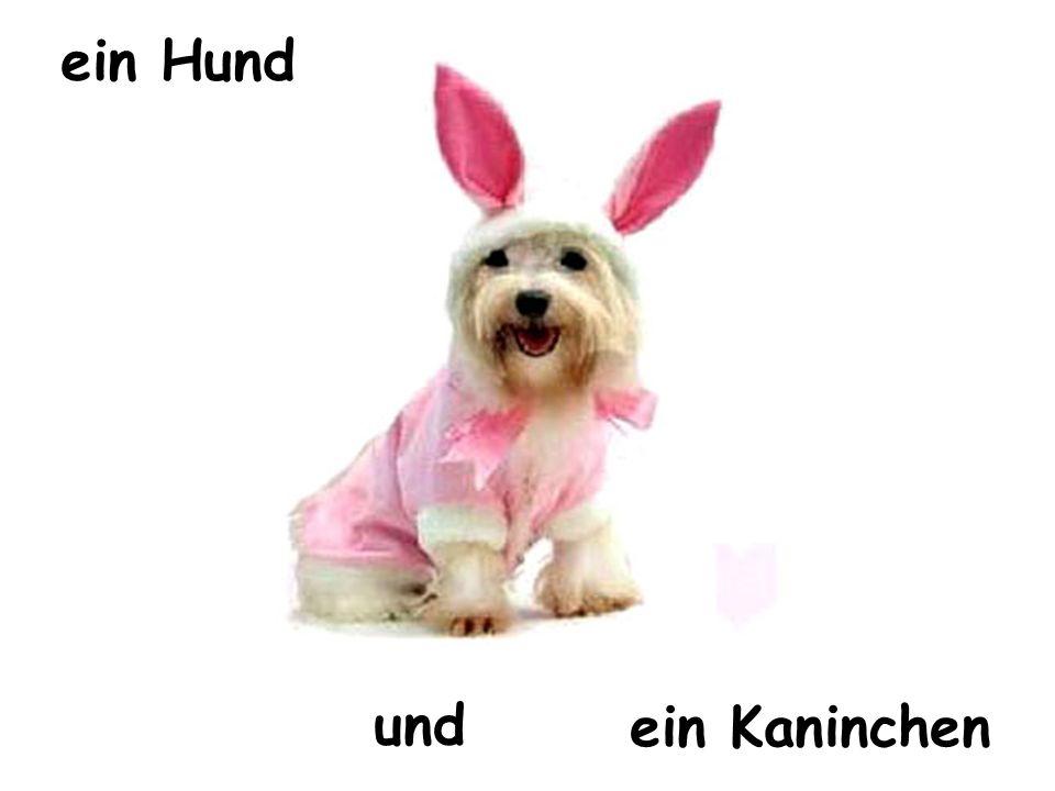 ein Hund und ein Kaninchen