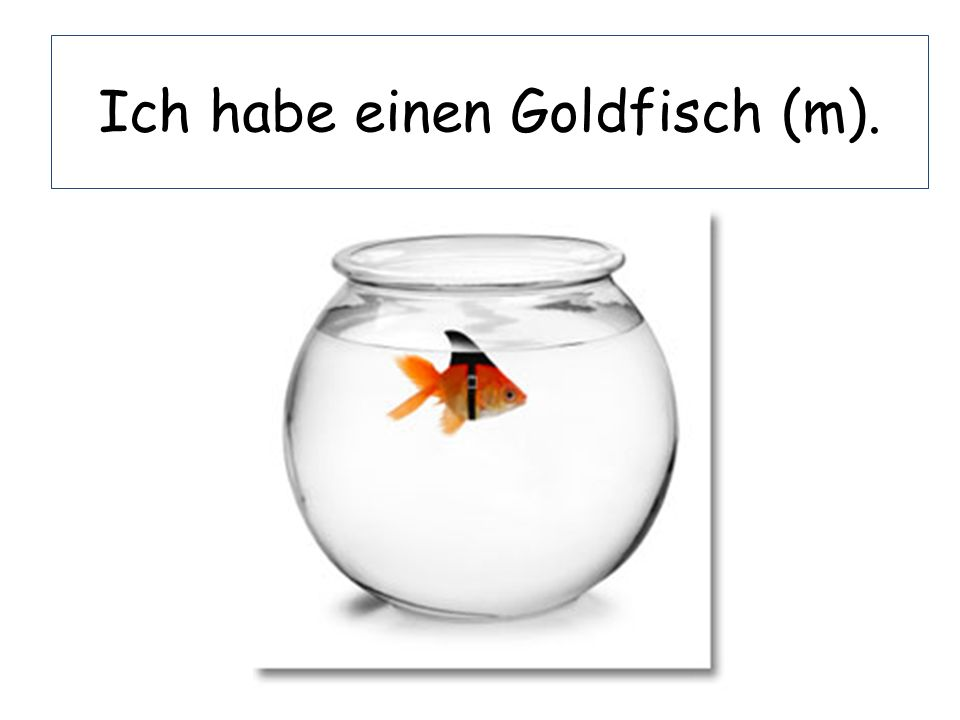 Ich habe einen Goldfisch (m).