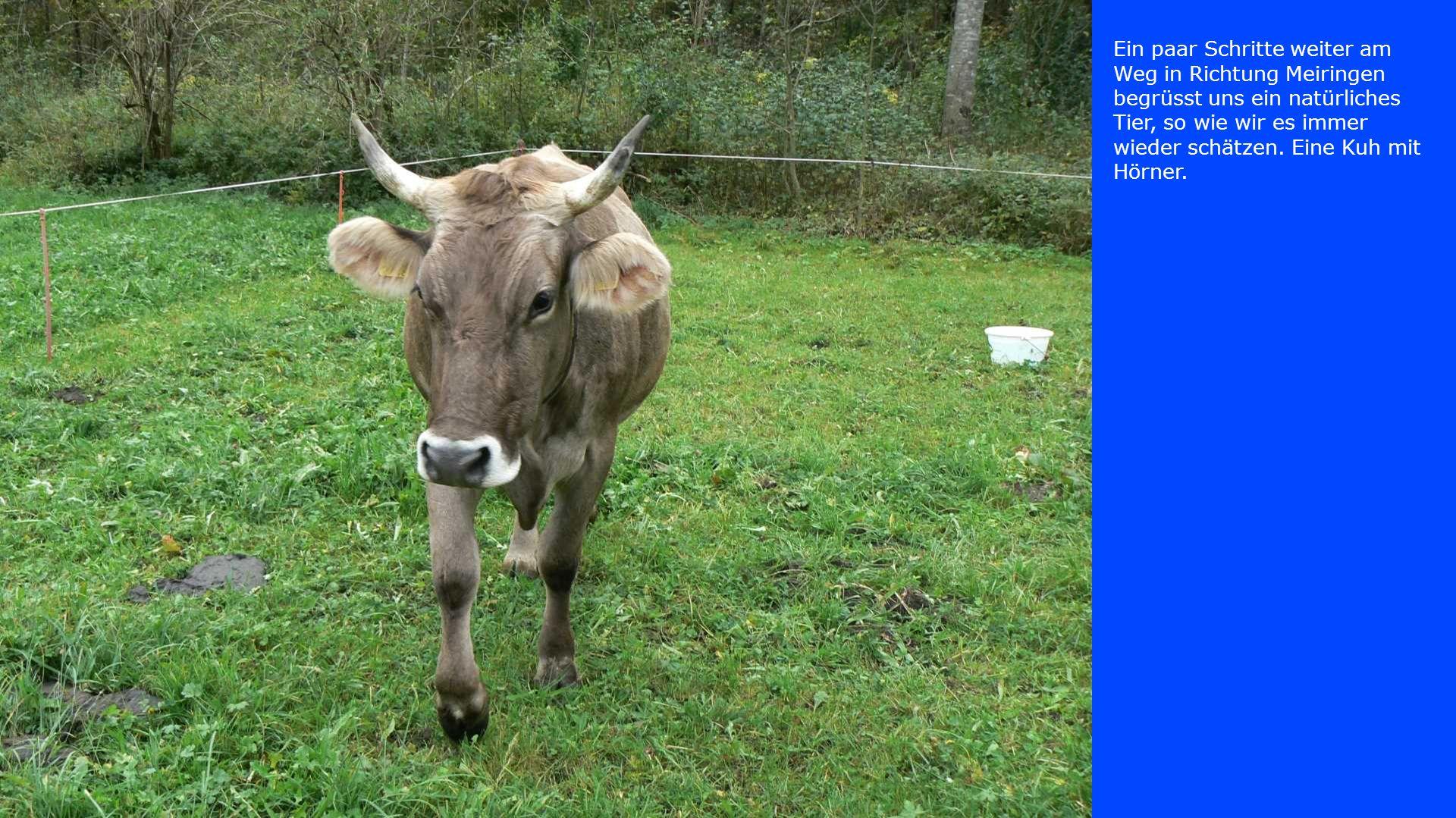 Ein paar Schritte weiter am Weg in Richtung Meiringen begrüsst uns ein natürliches Tier, so wie wir es immer wieder schätzen.
