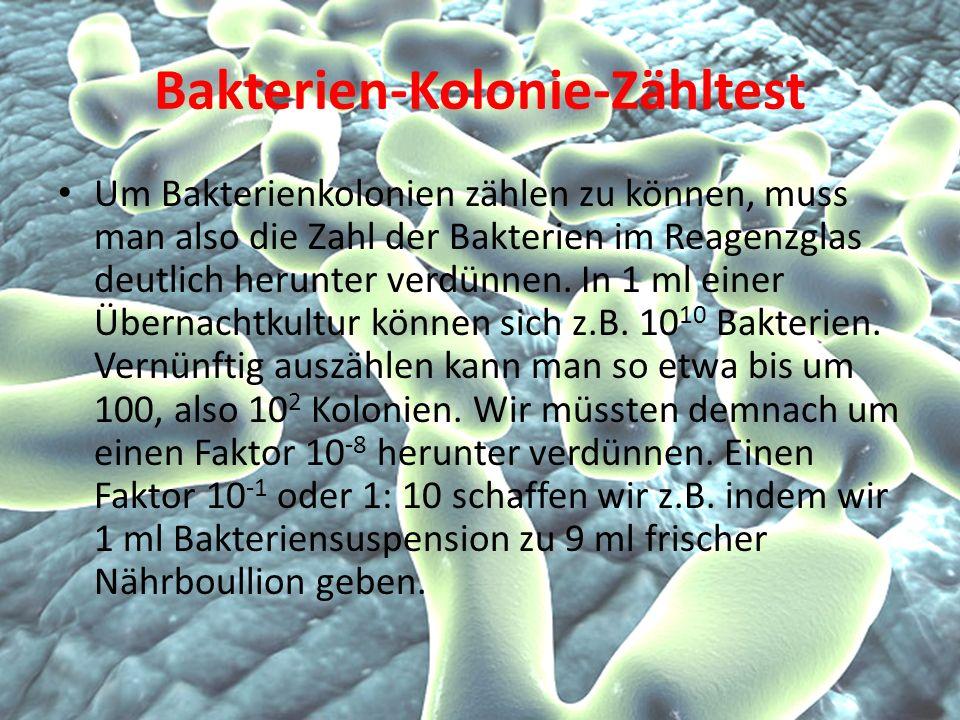 Bakterien-Kolonie-Zähltest