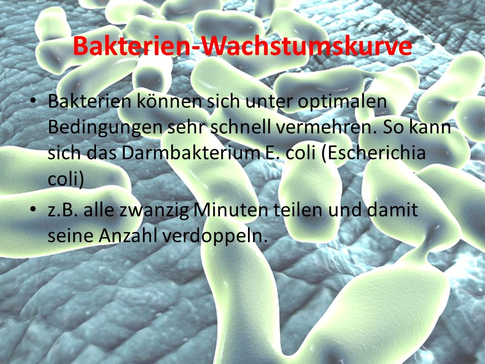 Bakterien-Wachstumskurve