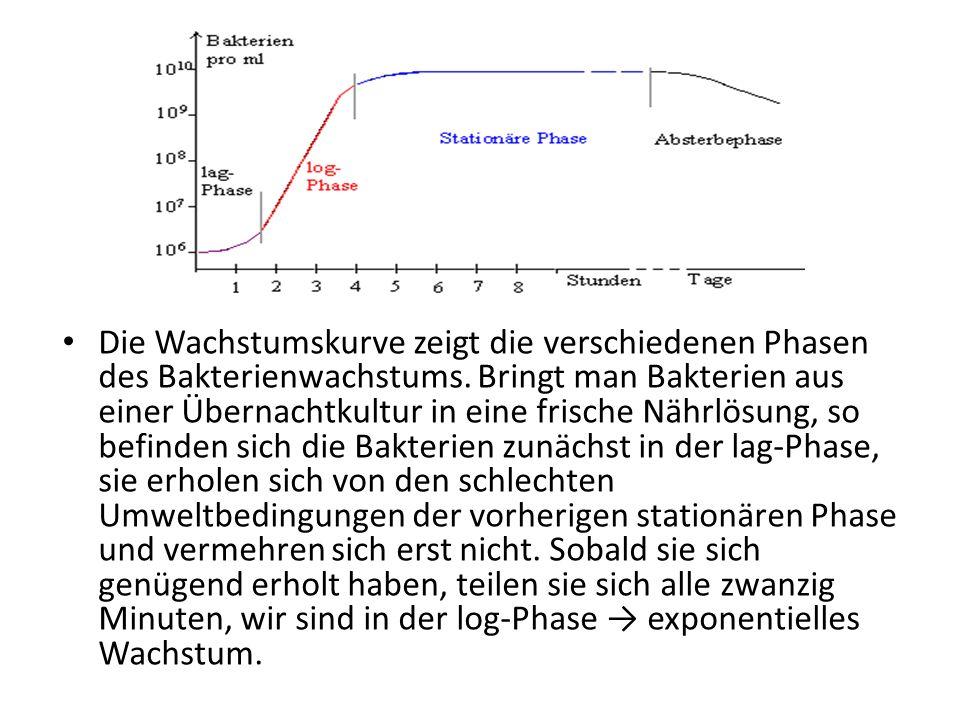 Die Wachstumskurve zeigt die verschiedenen Phasen des Bakterienwachstums.