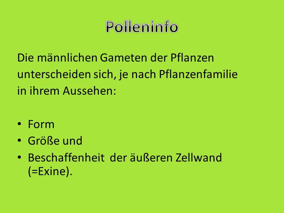 Polleninfo Die männlichen Gameten der Pflanzen