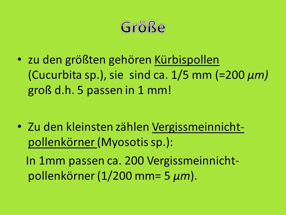 Größe zu den größten gehören Kürbispollen (Cucurbita sp.), sie sind ca. 1/5 mm (=200 µm) groß d.h. 5 passen in 1 mm!