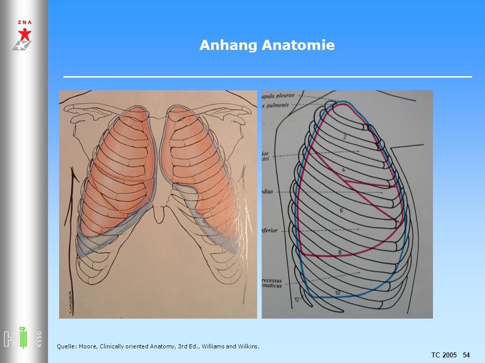 Anhang Anatomie Quelle: Moore, Clinically oriented Anatomy, 3rd Ed., Williams and Wilkins.