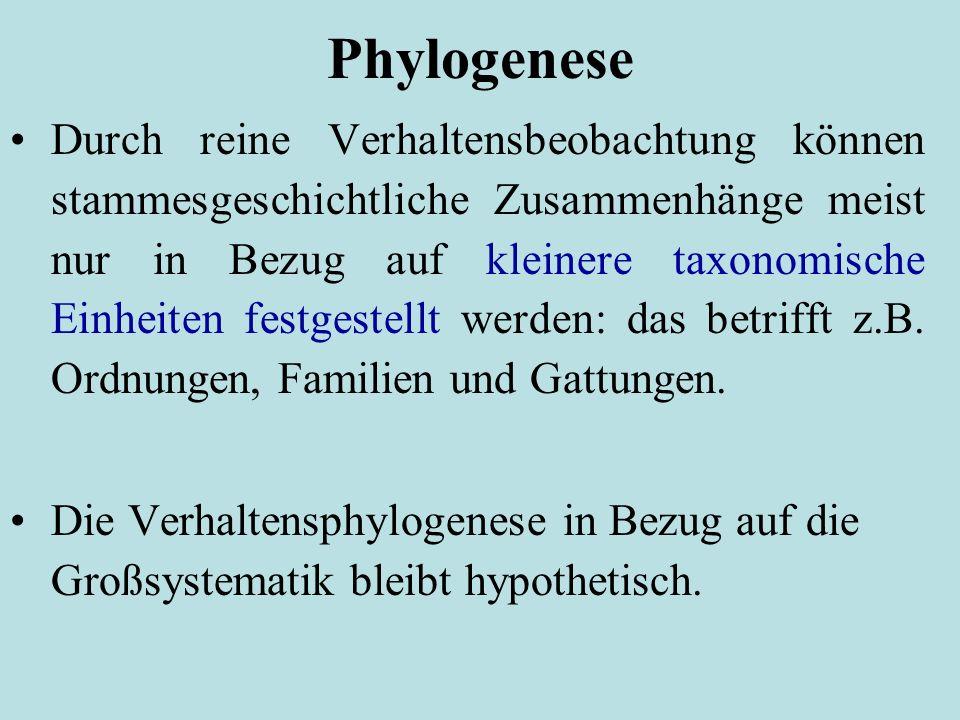 Phylogenese