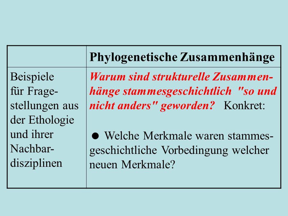 Phylogenetische Zusammenhänge