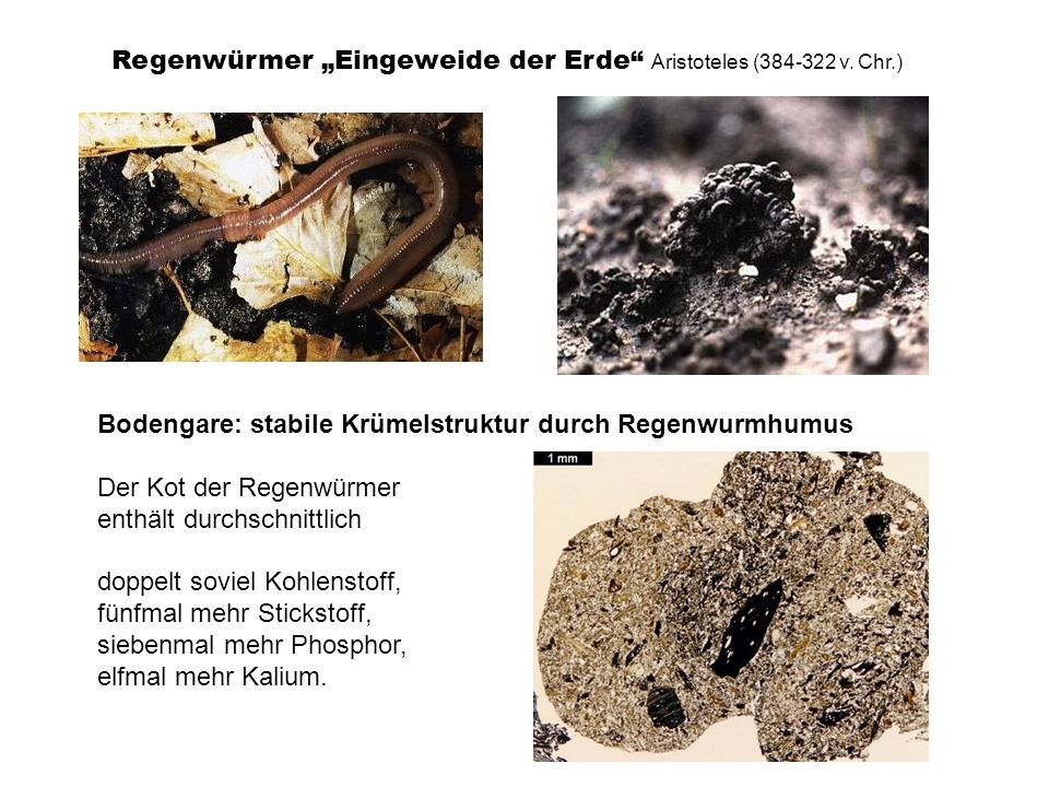 """Regenwürmer """"Eingeweide der Erde Aristoteles (384-322 v. Chr.)"""